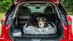 The Paw-Fect New Addition To Your Brand New Nissan X-Trail